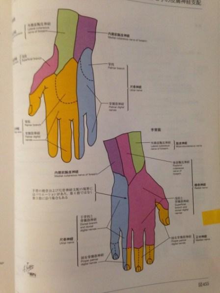 手のひらの痺れの治療 福岡県福津古賀宗像北九州市