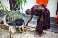 kosgoda,monks, monastery, sri lanka, Buddhist, fish, religion, dall, beach, dog