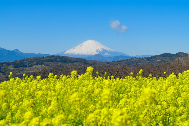 Mt. Fuji honeymoon ideas