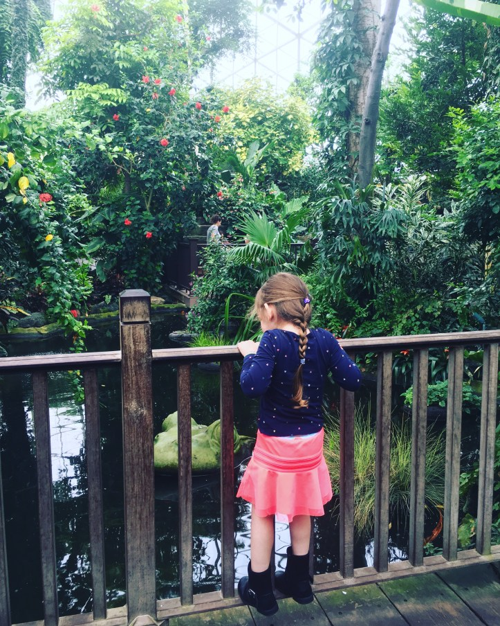 Watching the koi at Mitchell Park Domes | Maia Nolan-Partnow