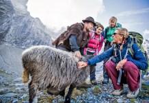 Afla totul despre lana Merino