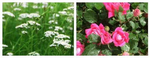 flower oracles 2