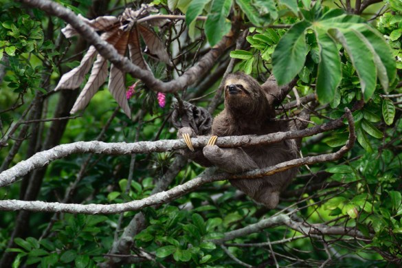What a Real-Deal Shaman Taught Me: Sloth