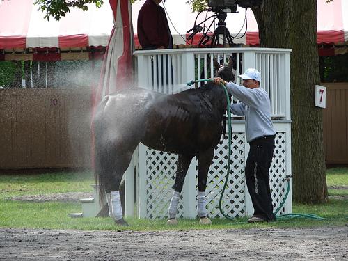 Horse gets a bath in saddling area at Saratoga.