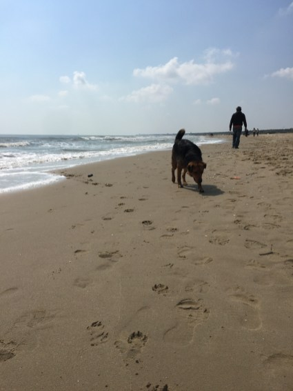 Spiagge dog friendly