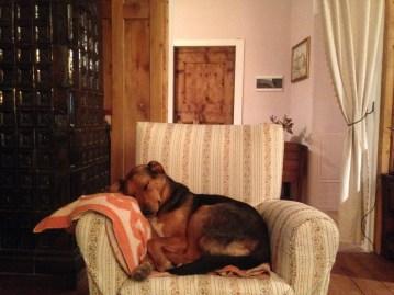 non far salire i cuccioli sui divani