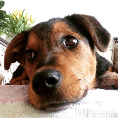non far salire cani sul divano
