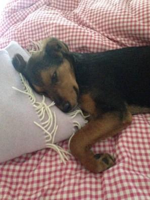 non far salire cani sul letto
