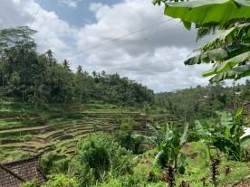 Le risaie di Ubud