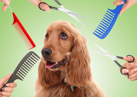3 Tips to Make House Cleaning Around Pets Easy
