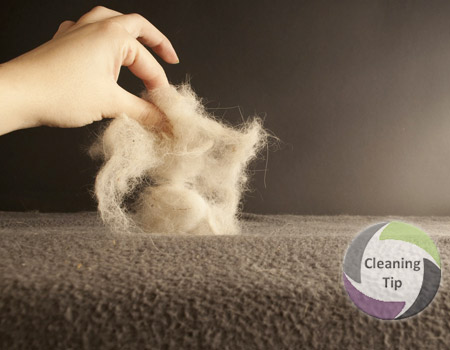 Maids by Trade's House cleaning tips - How to Control Pet Hair