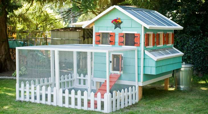 How-to-Clean-a-Chicken-Coop-4