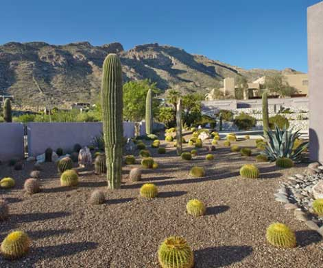 Cactus landscape in the Catalina Foothills