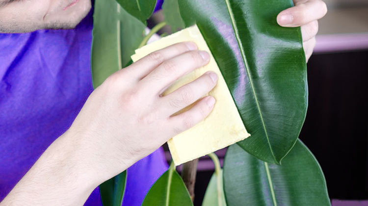 How to Clean Live Plants to Keep Them Healthy and live longer