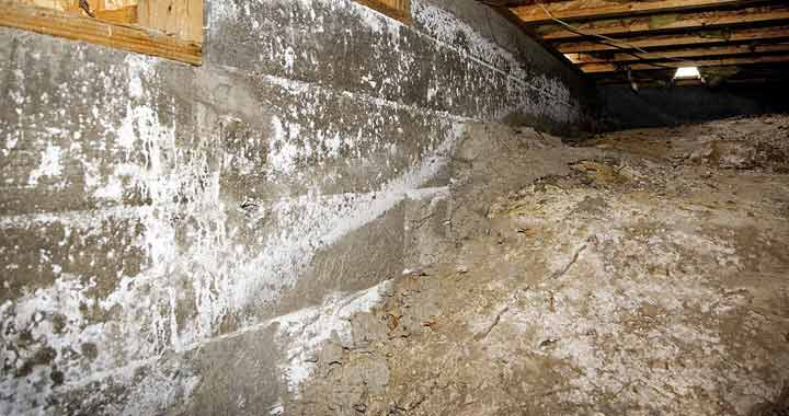 How to Clean a Crawl Space with mold