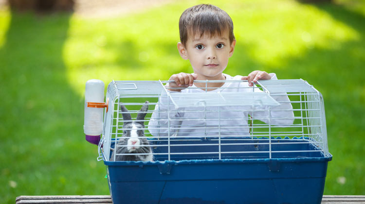 How to Clean a Pet Cage for all animals