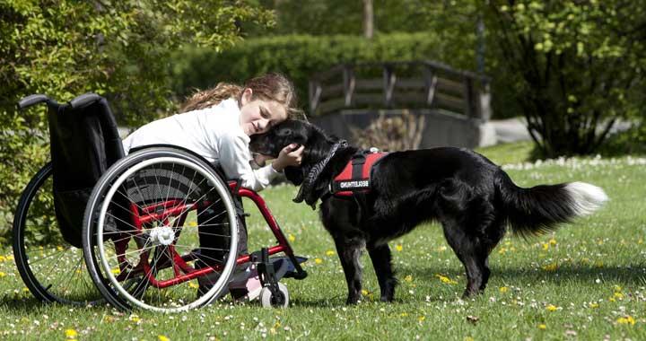 National Assistance Dog Day full of celebration