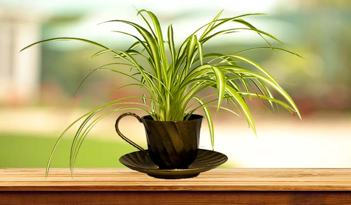 Bring New Life tea cups & Repurpose Them
