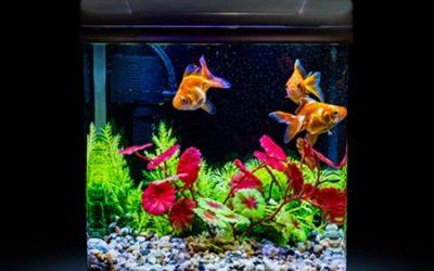 Safe Aquarium Cleaning—Making Swim Easy