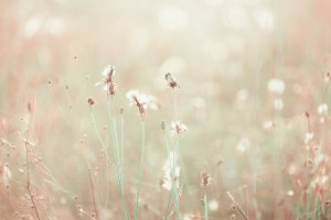 meadow_bokeh_pastel