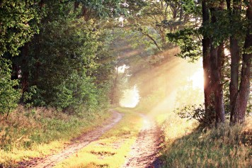 morning-path-sunbeam