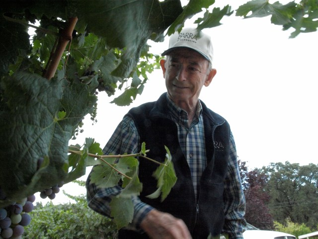 Barra inspects vines in his Mendocino County vineyard.