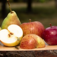 IG Riedberg lädt zur Apfelernte & zum großen Keltertag