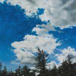 "Shelah Horvitz, ""Firs"", acrylic on panel, 12""x16"", 2017"