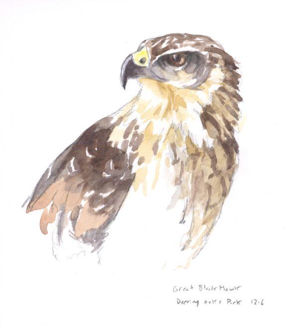 Sketchbook: North Yarmouth Naturalist & Painter Michael Boardman By Daniel Kany