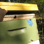 November 2014 – The Beekeepers Calendar