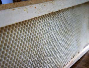 Now is the time to gather and properly store any remaining beekeeping equipment, dead outs and sort through honeycomb.