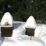 February 2012 – The Beekeepers Calendar