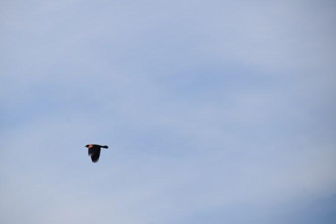 alfond-bird