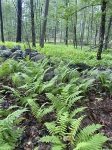 fuller-forest1