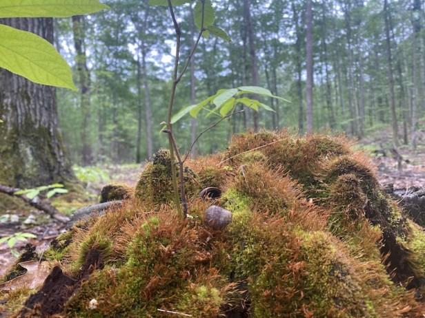 fullerforest3