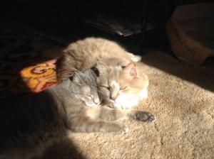 cats (300x224)