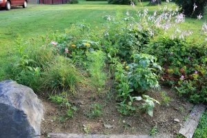 Larry's recently rehabbed garden