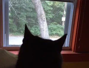 Binti always keeps a close watch on the other world outside.