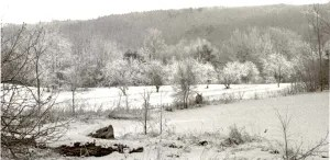 The apple orchard in winter.