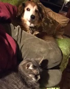 I may get a variety of vibes from other people, but my kitty and doggie always make me feel good.