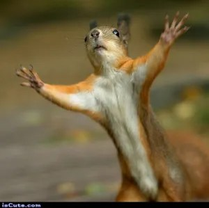 hands up squirrel