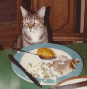 Our family cat, Mary Jane, joins the holiday table in 1981.