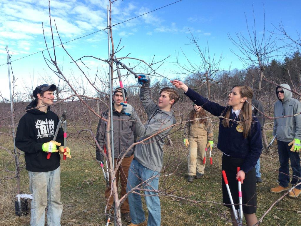 Draper participates in apple tree pruning with landscaping students from Sanford Regional Technical Center