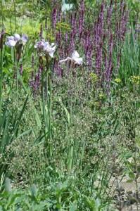 Perennial-Meadow-Spring-08