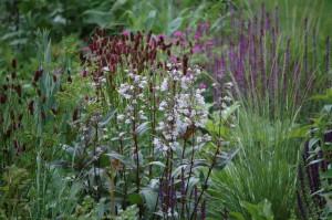 Perennial-Meadow-Spring-16