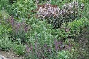 Perennial-Meadow-Spring-18
