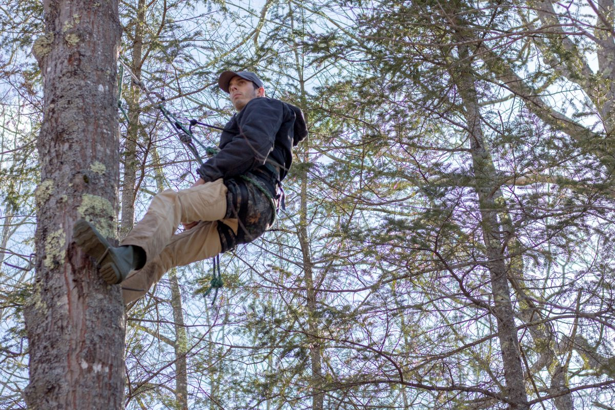 Aero Hunter Review: A New Tribe Tree Saddle - Mainely Whitetails