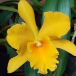 About the Maine Orchid Society