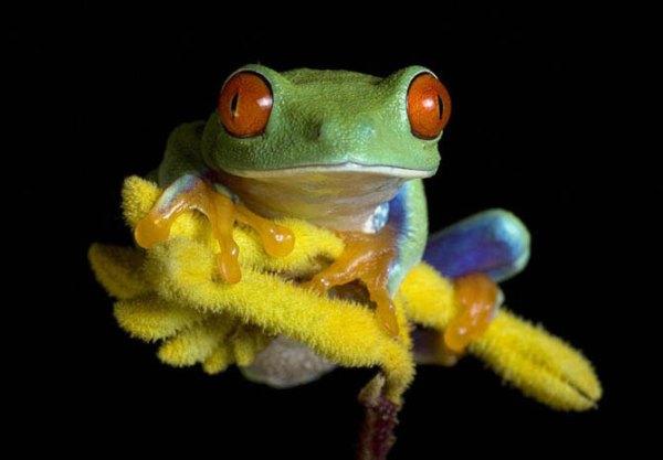 Интересные факты о лягушках (26 фото + текст)