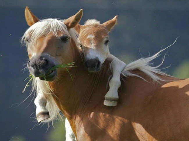 Животные и их малыши (32 фото)